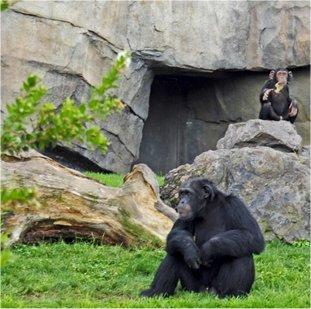 zoo en la conservació