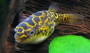 peix-globus-22