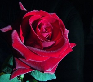 foto-rosa-roja1