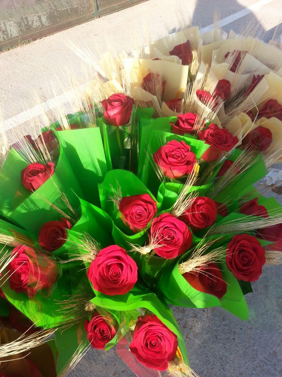 Les nostres roses de Sant Jordi