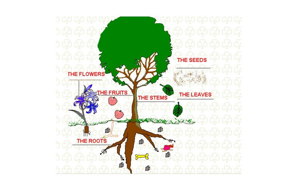 parts-of-plants1