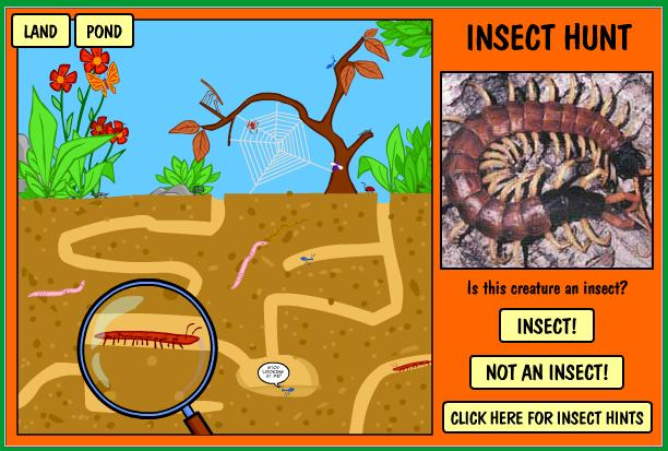 hunt insects