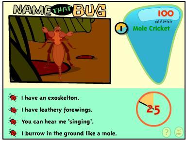 name the bug
