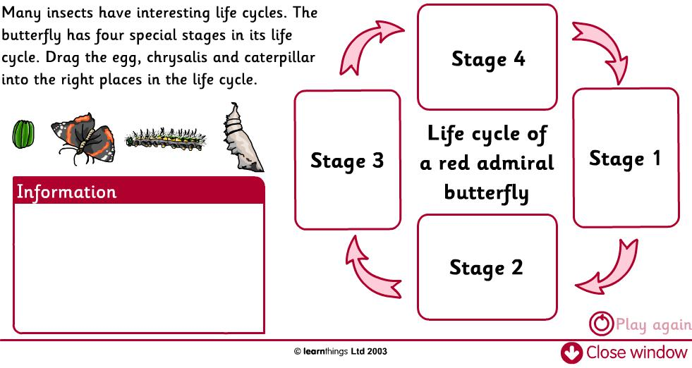 Cat Life Cycle Worksheet | LZK Gallery