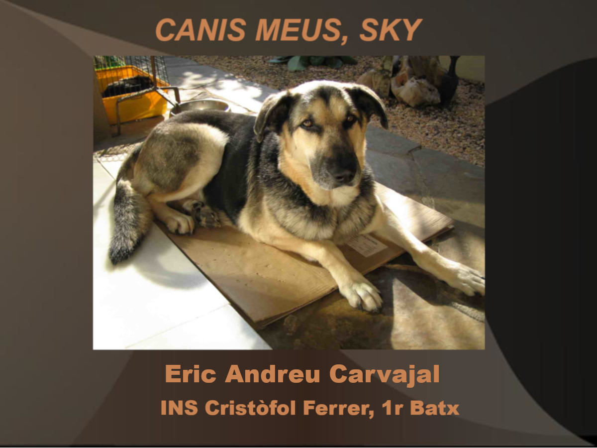 canis_01