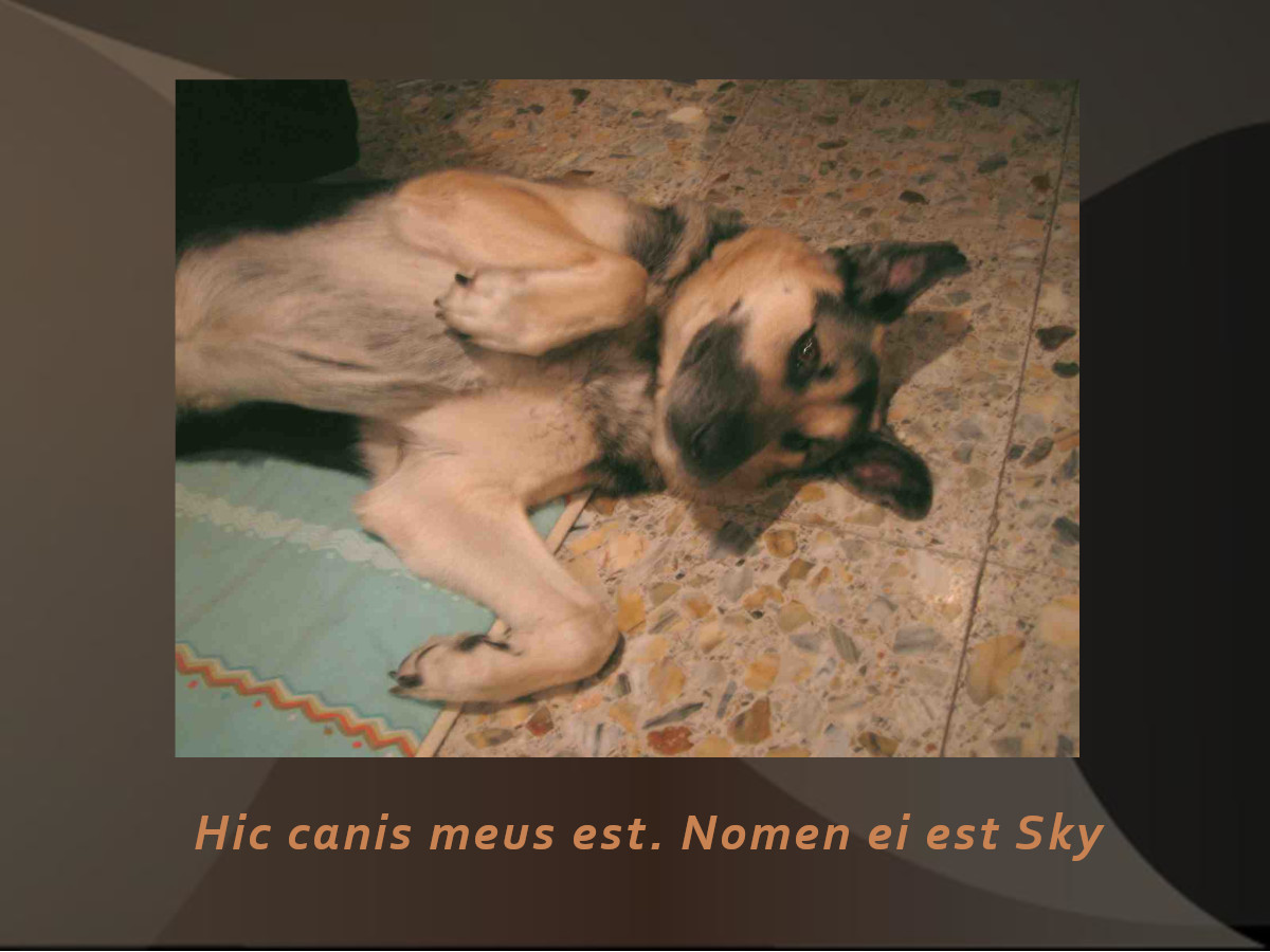 canis_02