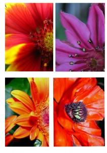 flors-8