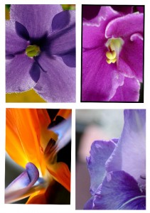 flors7