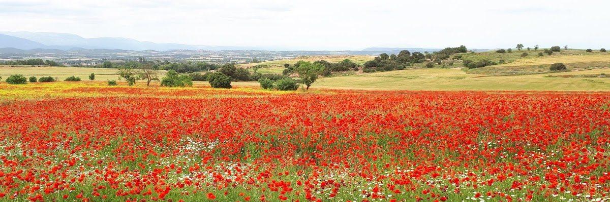 El bloc de català