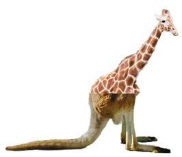La increible girafa cangur