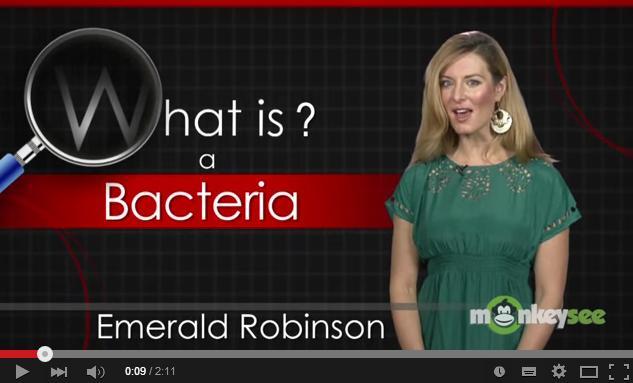 whatisbacteria