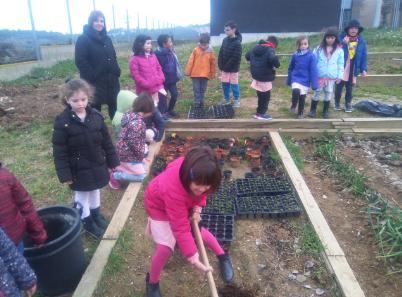 Plantarem patata