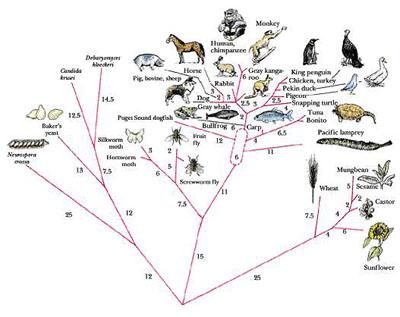 arbre animals