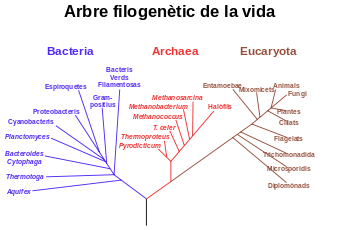 arbre fiolgenetic