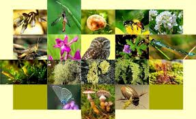 biodiversitat 1