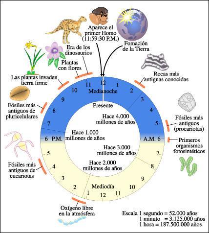 rellotge Terra