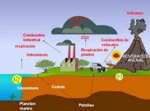 ciclo del carbono 2