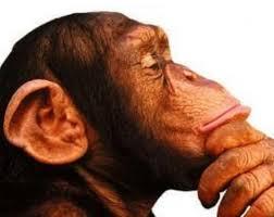 pensar ximpanzè