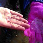 Mig centímetre de gruix d'aigua gelada a les zones calmades de la riera