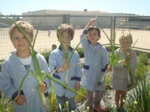 Els nens i nenes de P4 collint les seves verdures.