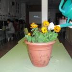 plantes-035