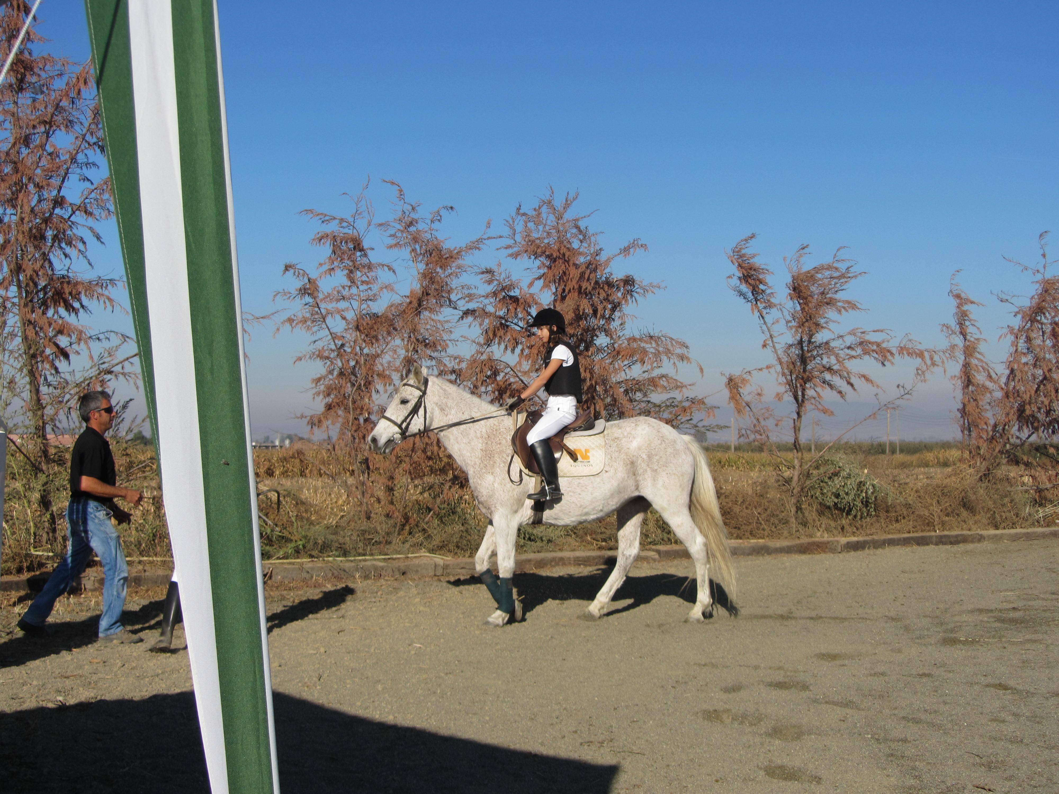 cavalls novembre-13