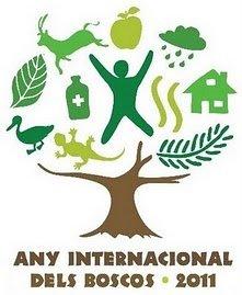 any-internacional-dels-boscos