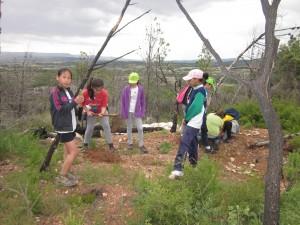 Repoblem el bosc amb pins i alzines