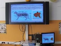 mamifers2b.jpg