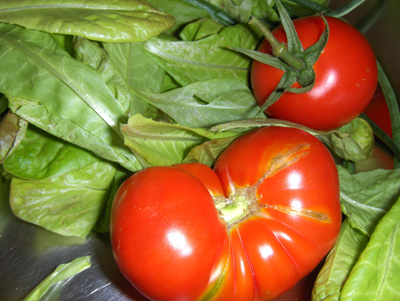 tomaca.jpg