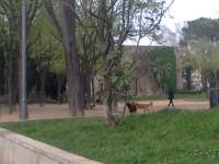 imatge0224