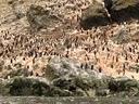 bahia-falsa-detall-pinguinera