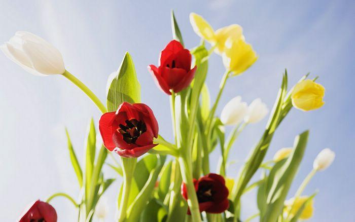 2flowersblooming