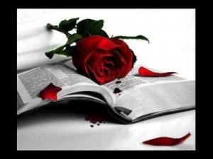 roses-i-llibre2