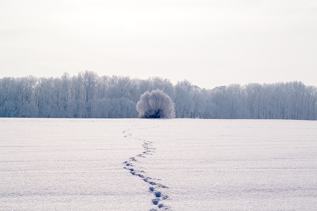 campos-alemania-blancos-nieve-invierno