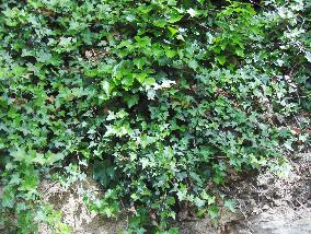 plantes1