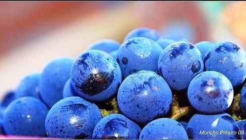 uva-mencia-por-moncho