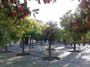 Patio de los naranjos. Mezquita de Córdoba