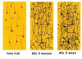 desarrollo_red_neuronal1.jpg