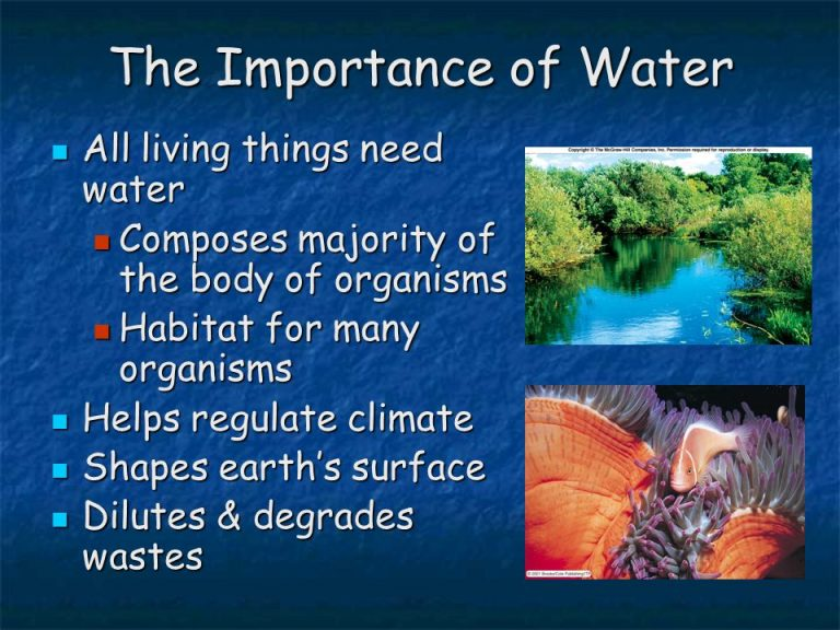a report on the importance of water