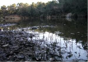 Zona pantanosa