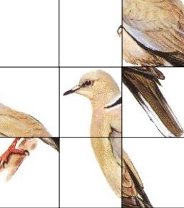 puzzle-ocells