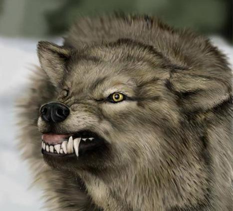 angry_wolf.jpg