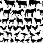 5090878-recogida-de-animales-de-granja-vector2
