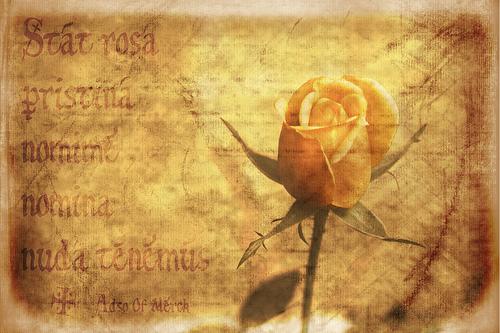 """Sant Jordi i """"El Nom de la rosa"""""""