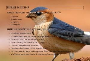 Curiositats sobre les aus