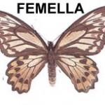femella-cua-docell