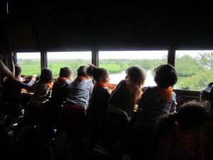 Observant com emigren les cigonyes als Aiguamolls de l'Empordà