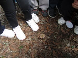 Al bosc hem trobat molts bolets