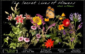 thesecretlivesofflowers
